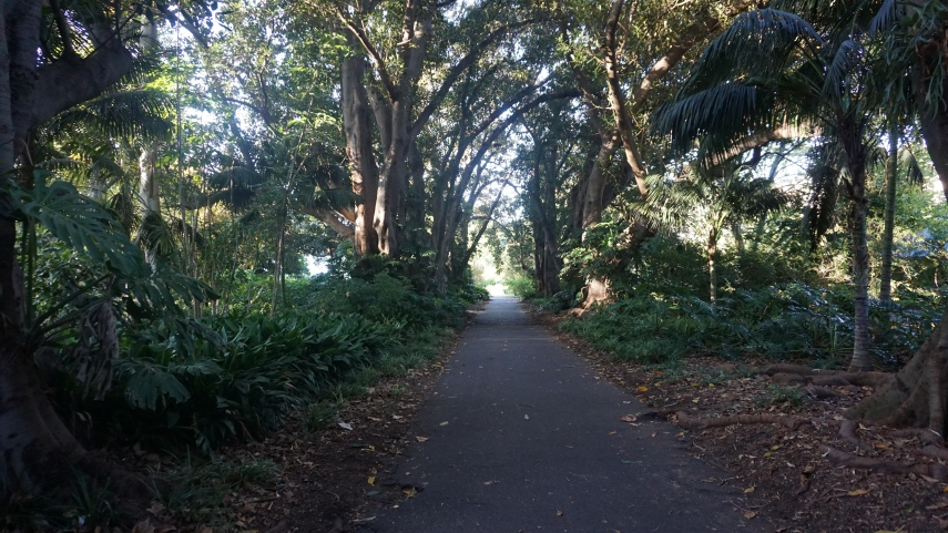 Walking through the beautiful & dense botanic gardens
